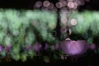 近くの花のアップの写真・画像素材[1013702]