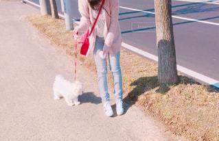 犬 - No.458412