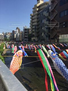 #鯉のぼり #川 #高田馬場 #空の写真・画像素材[459548]