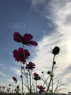 曇りの日に花の花瓶 - No.795373
