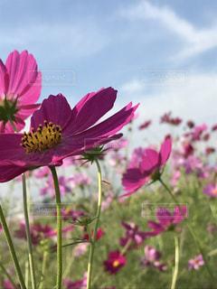 近くの花のアップ - No.795384