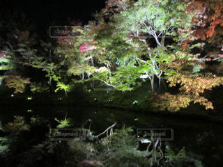 近くの緑豊かな緑の森の写真・画像素材[846021]