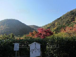 背景の山と木の写真・画像素材[846025]
