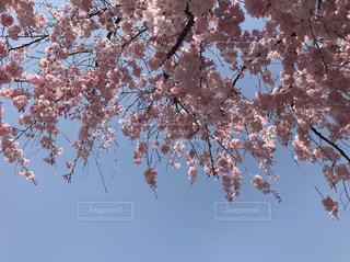 木の上を飛ぶ鳥の群れ - No.1103399