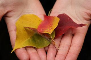 秋のプレゼントの写真・画像素材[893106]
