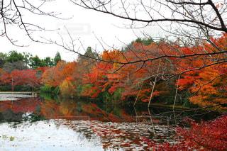 水面に映る紅葉の写真・画像素材[893113]