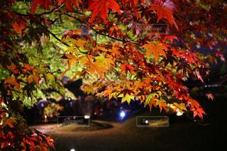 紅葉のライトアップ - No.896065