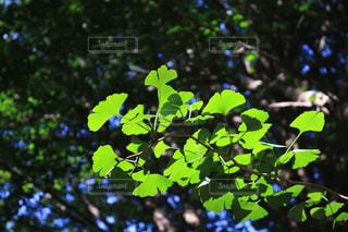 近くの木のアップの写真・画像素材[1162807]