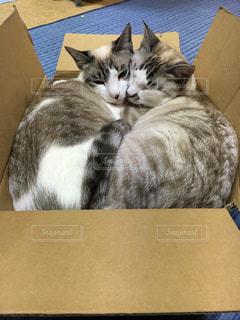 ネコの箱詰めの写真・画像素材[1278228]