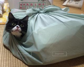 ベッドの上に座っている猫の写真・画像素材[1292518]