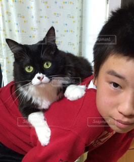 赤いシャツを着て猫の写真・画像素材[1292529]