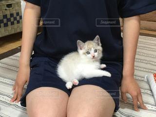 猫を保持している女性の写真・画像素材[1292545]