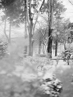 雪化粧した木々の写真・画像素材[1739298]
