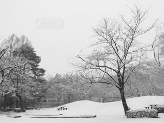 雪に包まれた公園の写真・画像素材[1739309]