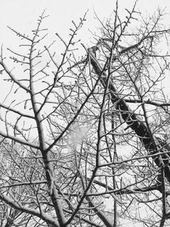 近くの木のアップの写真・画像素材[1741950]