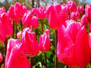 近くの花のアップの写真・画像素材[1792002]