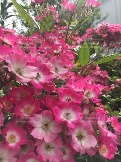 近くの植物にピンクの花のアップの写真・画像素材[1792008]