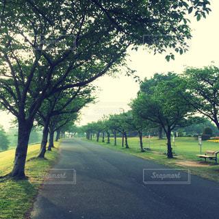 公園の写真・画像素材[471760]