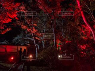 秋,夜,紅葉,ライトアップ,秋田,仙北郡,旧池田氏庭園
