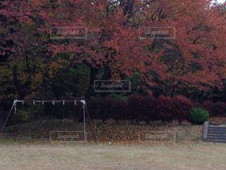 フィールドの真ん中の木の写真・画像素材[845644]