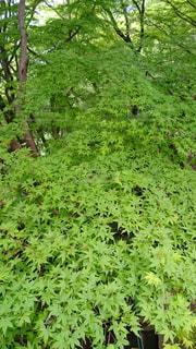 緑 - No.463387