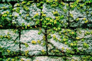 緑の写真・画像素材[484585]