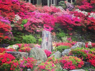 カラフルなフラワー ガーデンの写真・画像素材[1035097]