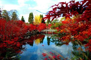 京都 南禅寺 永観堂🍁感動の絶景✨の写真・画像素材[1598854]