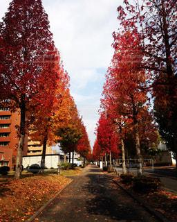 道の端に木の写真・画像素材[1627368]