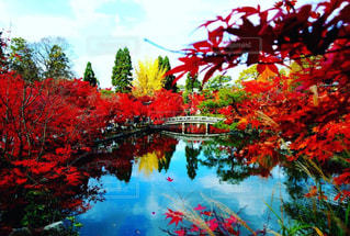 南禅寺×紅葉🍁の写真・画像素材[1669732]