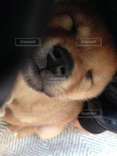 mix犬,犬の寝顔