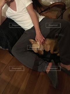 犬,仲良し,ペット,寝顔,mix犬,犬の寝顔