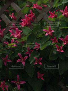 植物の写真・画像素材[543312]