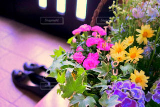 花の写真・画像素材[487456]