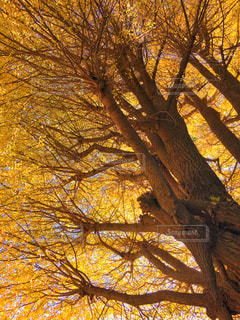 近くの木のアップの写真・画像素材[879974]