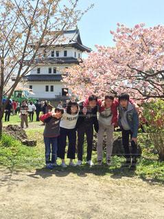 桜の写真・画像素材[466047]