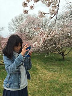 No.466065 桜
