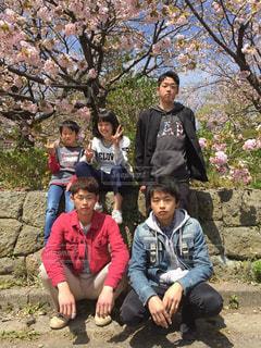 桜の写真・画像素材[565938]