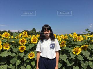 ひまわり畑での写真・画像素材[857262]