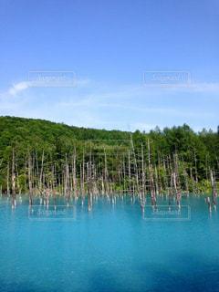 青い池の写真・画像素材[1016437]