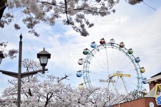 桜の写真・画像素材[532397]