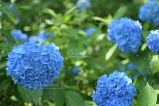 花の写真・画像素材[549584]