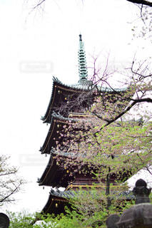 上野 - No.565667