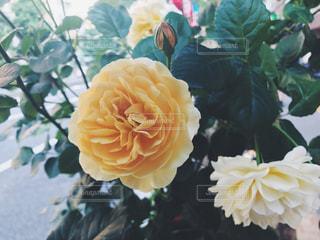 花の写真・画像素材[595665]