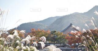 山の中腹にヤシの木のグループの写真・画像素材[848391]