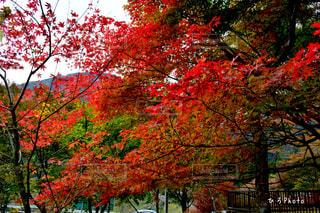 近くの木のアップの写真・画像素材[872553]