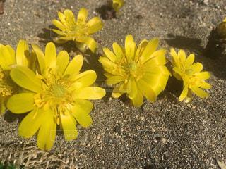 花,黄色,イエロー