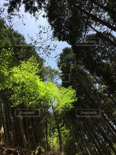 緑  緑の鮮やかさの写真・画像素材[478290]