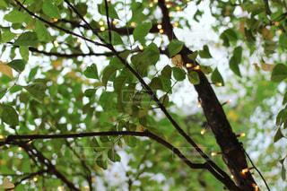 木の写真・画像素材[470223]