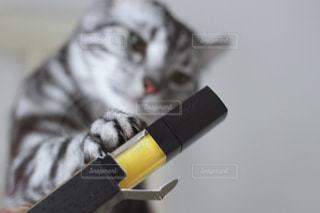 猫の写真・画像素材[529223]